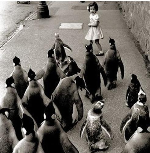 penguins chasing little girl