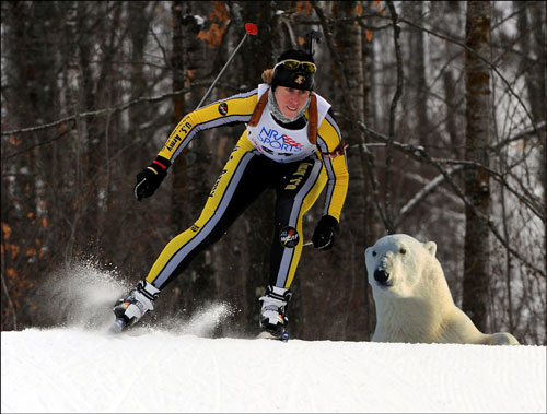 Polar biathlon -- x-country skiing with polar bears!