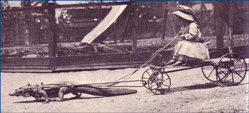 small girl riding in buggy pulled by alligator