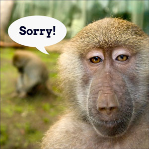 Sorry -- 404 error page image of primate saying sorry