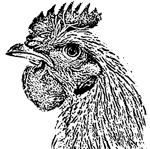 Woodcut of rooster