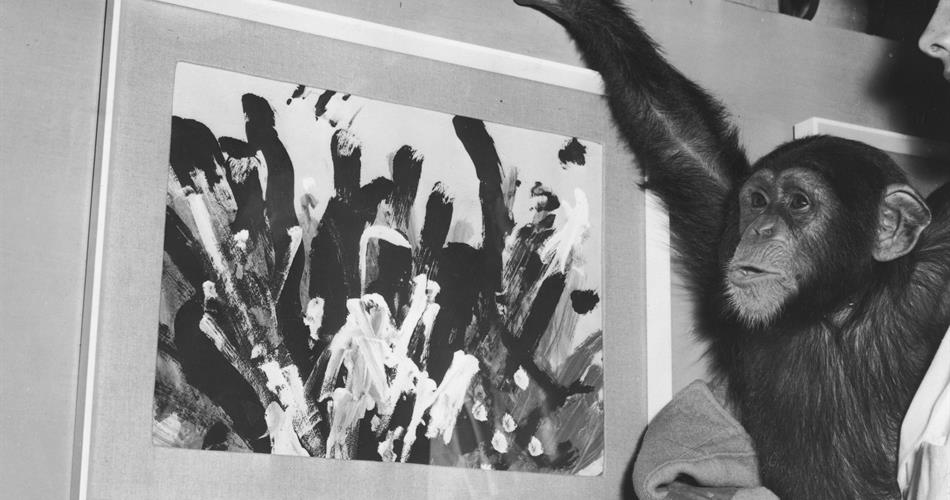 congo the chimp poses with one of his paintings