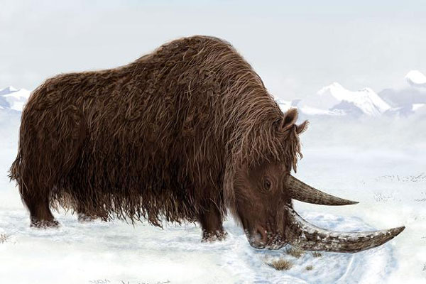 Grunk's career had been cut short by the business end of a woolly rhino