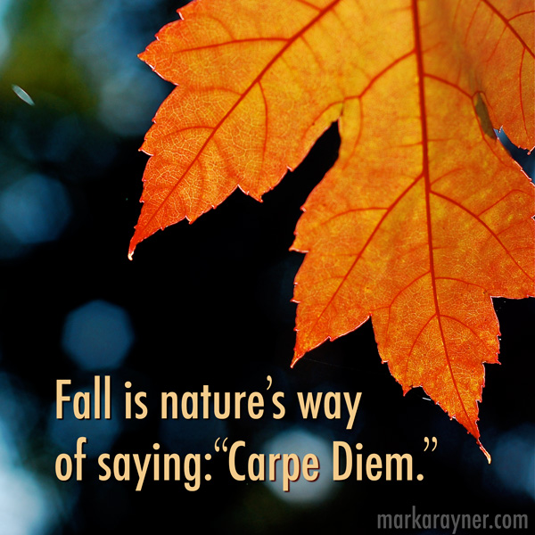"fall is nature's way of saying ""carpe diem"""
