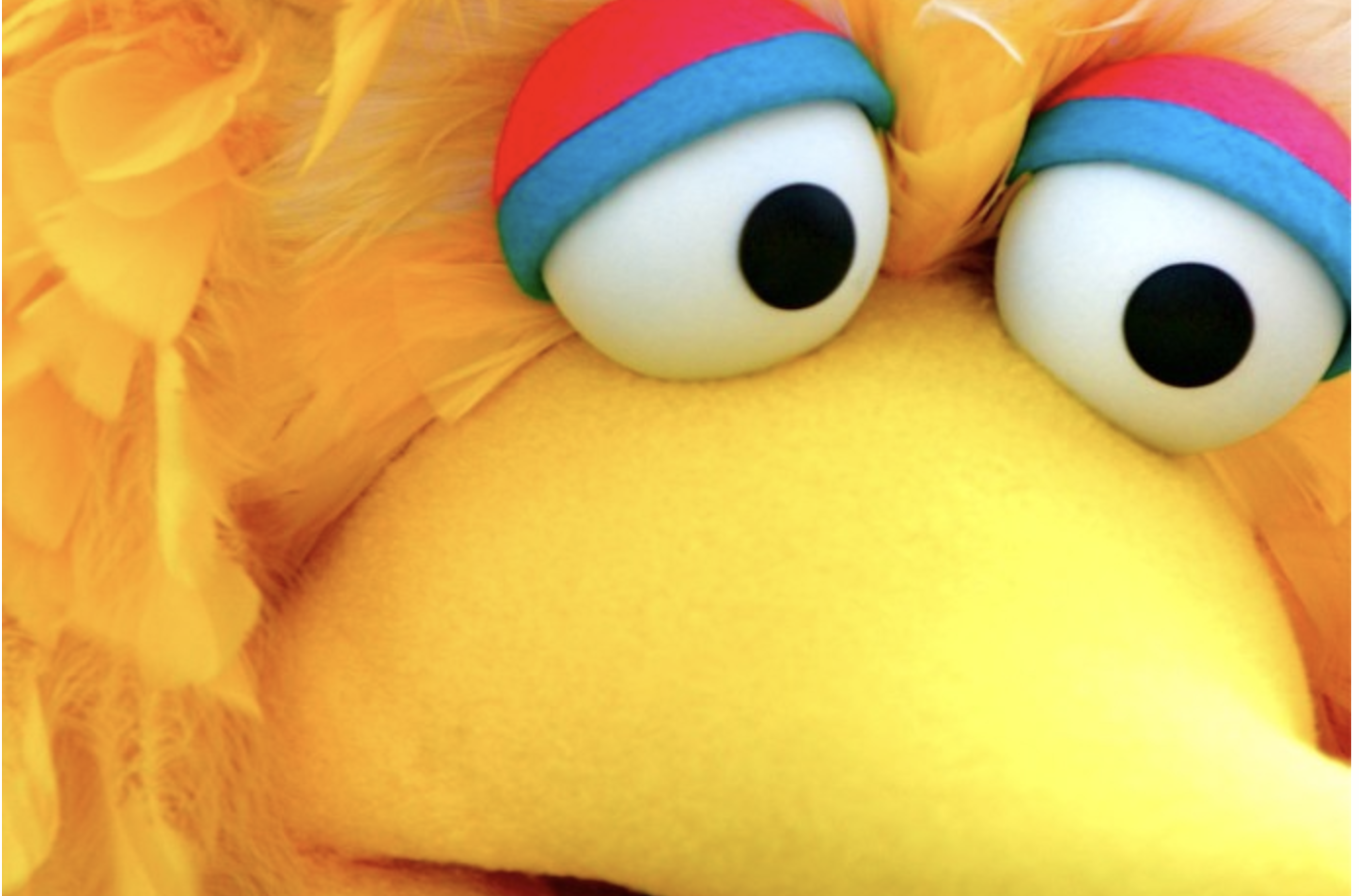 extreme close up of big bird's googlie eyes